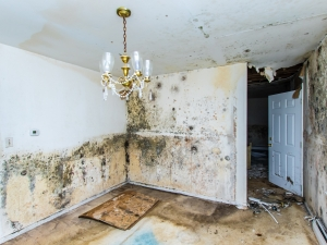 Extensive mold growth on the walls and ceilings of a home