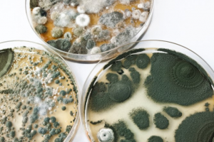 There are many different types of mold