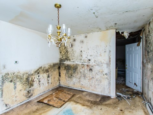 Mold can spread quickly and cause major problems.